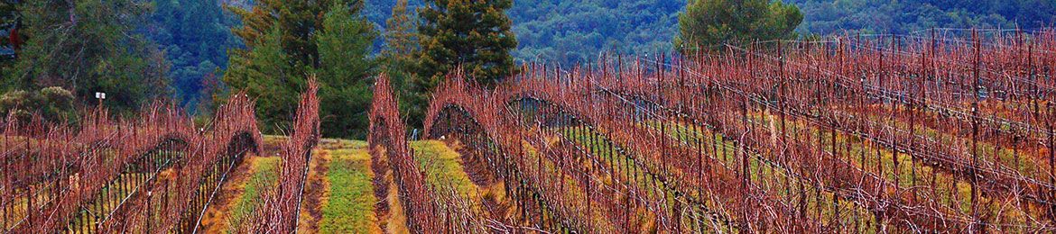 header_vineyard-fall