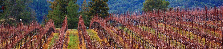 header_vineyard-fall