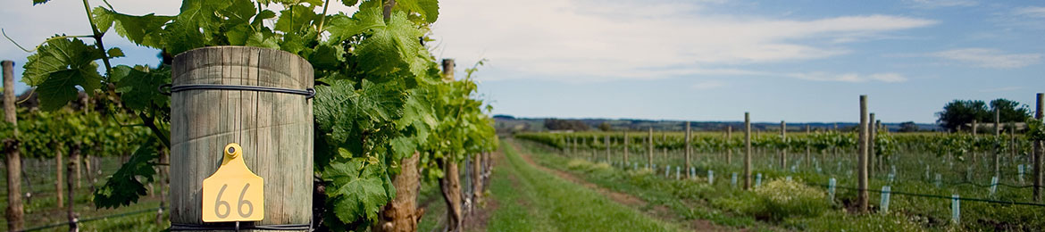 header_vineyard-rows